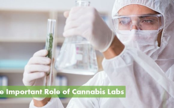 High-Quality Cannabis Testing Labs: ( https://10buds.com )